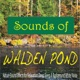 Sounds of Walden Pond Nature Sound Effects for Relaxation Deep Sleep Background White Noise
