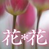 花*花〜癒される花との語り合い〜