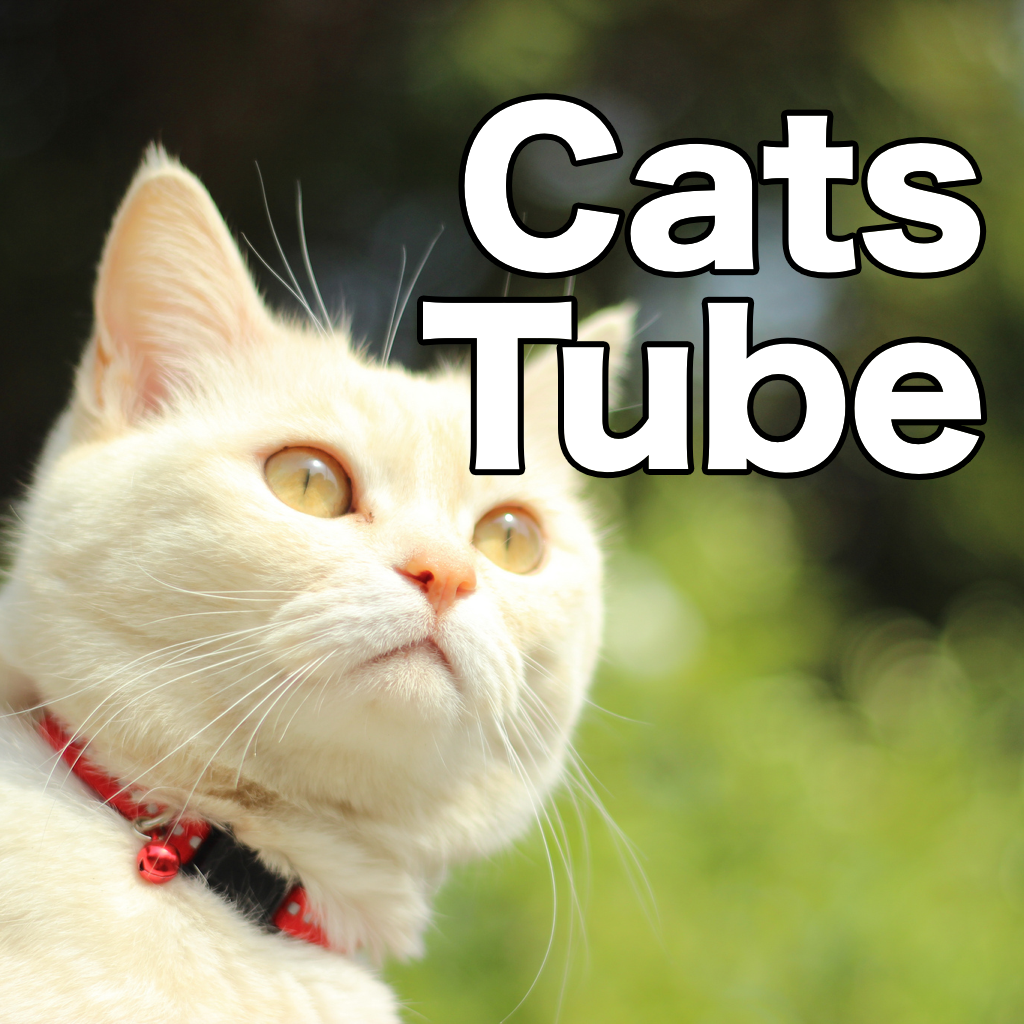 Cats videos playback: CatsTube