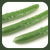 内田悟のやさい塾アプリ-夏の旬野菜2/キュウリ