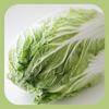 内田悟のやさい塾アプリ-冬の旬野菜2/白菜