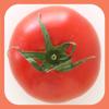 内田悟のやさい塾アプリ-春の旬野菜1/トマト
