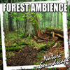 Forest Ambience (Nature Sounds) - Single - Nature Soundscape