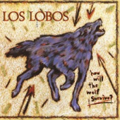 Los Lobos - I Got to Let You Know