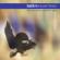 Latin Essentials, Vol 11: Azymuth - Azymuth