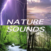Everything in Nature (Nature Sounds)