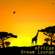 African Dream Lounge - African Tribal Orchestra