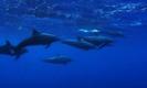 Dolphins of Bali 2007 - Jornada del Sol