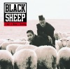 A Wolf In Sheep's Clothing ジャケット写真