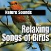 Relaxing Songs of Birds