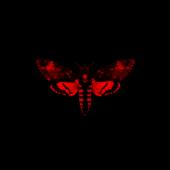 Wowzerz (feat. Trina) - Lil Wayne