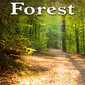 [Download] Tranquil Breezy Early Morning Forest MP3