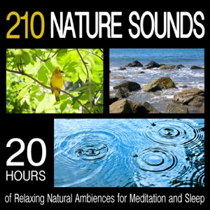 Pro Sound Effects Library - Waves Crashing on the Shore