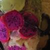 Applesauce - Single ジャケット写真