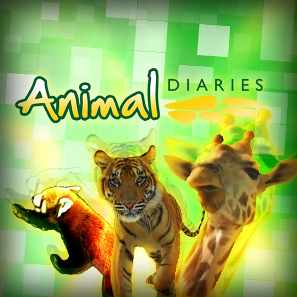 Patient Of The Week At Australia Zoo: Apple Podcat内のAustralia Zoo「Australia Zoo TV