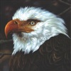 The Hawk Is Howling ジャケット写真