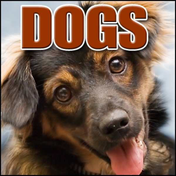 Dogs: Sound Effects by Sound Effects Library