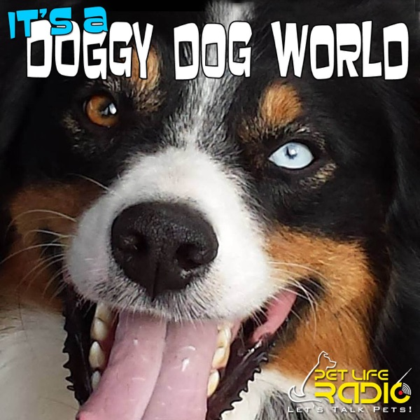 It's A Doggy Dog World Episode 128 Contest Winners, Quirks