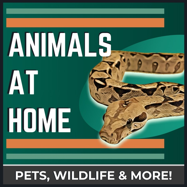 The Animals at Home Podcast