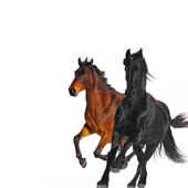 Old Town Road (feat. Billy Ray Cyrus) [Remix] - Lil Nas X Cover Art