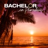 Bachelor in Paradise, Season 6 - Synopsis and Reviews