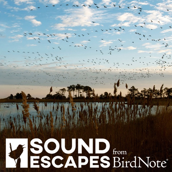Sound Escapes from BirdNote