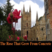 The Rose That Grew from Concrete (Unabridged)