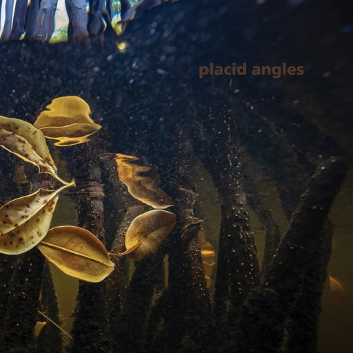 Touch the Earth by Placid Angles