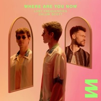 Lost Frequencies & Calum Scott - Where Are You Now