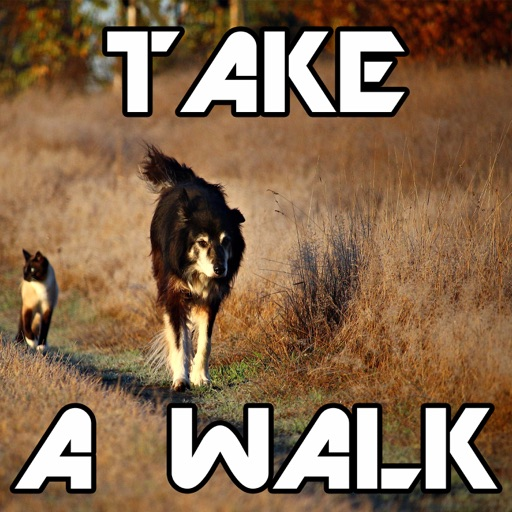 Cover image of Take A Walk!