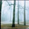 SILENCIO・・・南米屈指のピアニスト、ウーゴ・ファトルーソを迎えた静寂のアルバム。 ジャケット写真