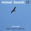 African Birds 3 - Doug Carroll