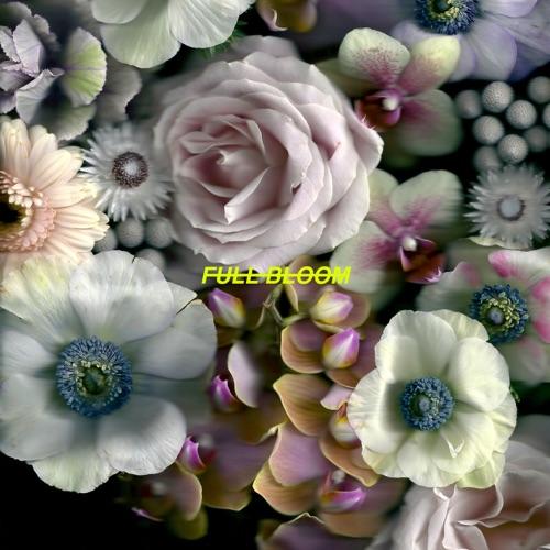 https://mihkach.ru/alpines-full-bloom/Alpines – Full Bloom