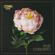 Post Concerto - Coma_Cose