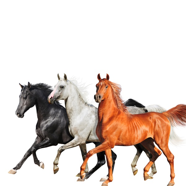 Old Town Road (Diplo Remix) - Single