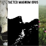 Taeter - Opaque