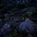 Soniscapes Twilight Soundscape in the Rural Mountains of Central Mexico - Soniscapes