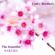 The Beautiful Sakura