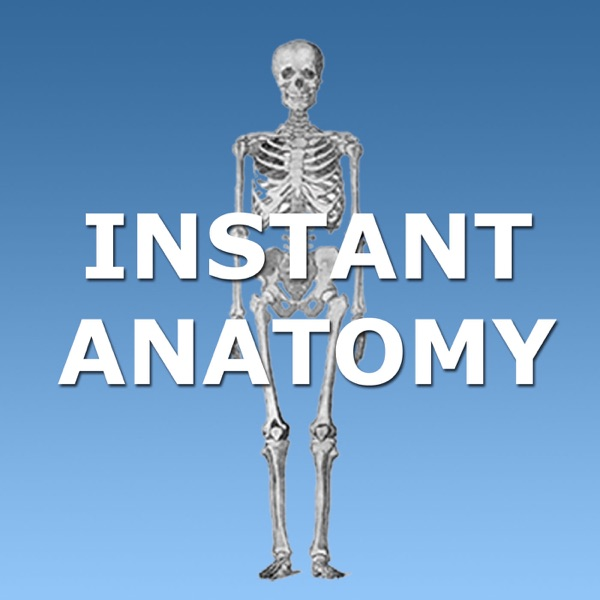 AB5 - Abdomen: Small and large bowel, blood supply of intestine and