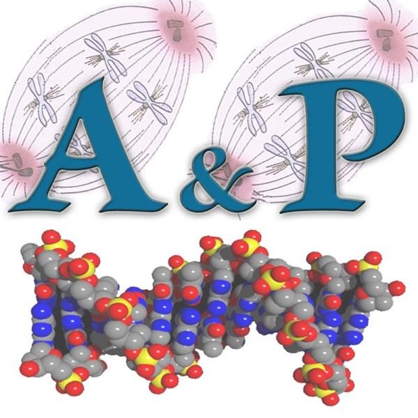 Advanced A & P - Dr. Bonner