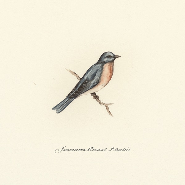 Bluebird - Single
