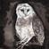 Owl Song - Cosmo Sheldrake