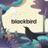 Blackbird - Sleepyheadz