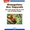 Orangutans Are Copycats: But each groups has its own way of doing things.