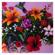 Totes les flors - Roger Mas