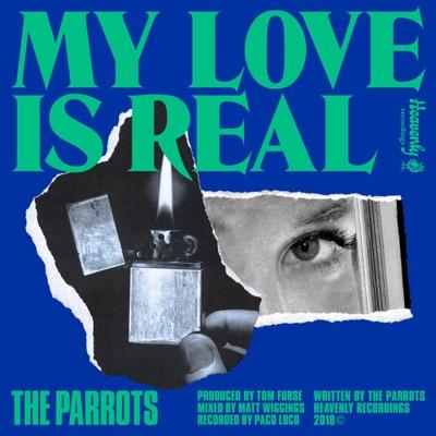 My Love Is Real The Parrots Shazam Cmsigue tu camino que sin ti me va mejor. shazam