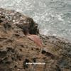 Sunni Colón - Baby I Don't Mind обложка