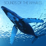 Nature Chillout - Humpback's Song
