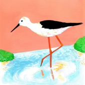 Woody Goss - Black-winged Stilt