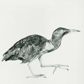 Cuckoo Wake up Call - Cosmo Sheldrake